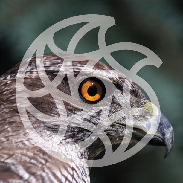 Logogenesi occhio del falco