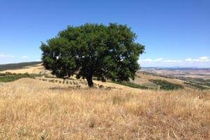 albero verso rocca d'orcio