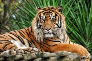 Lectio magistralis della tigre. Percezione del colore.