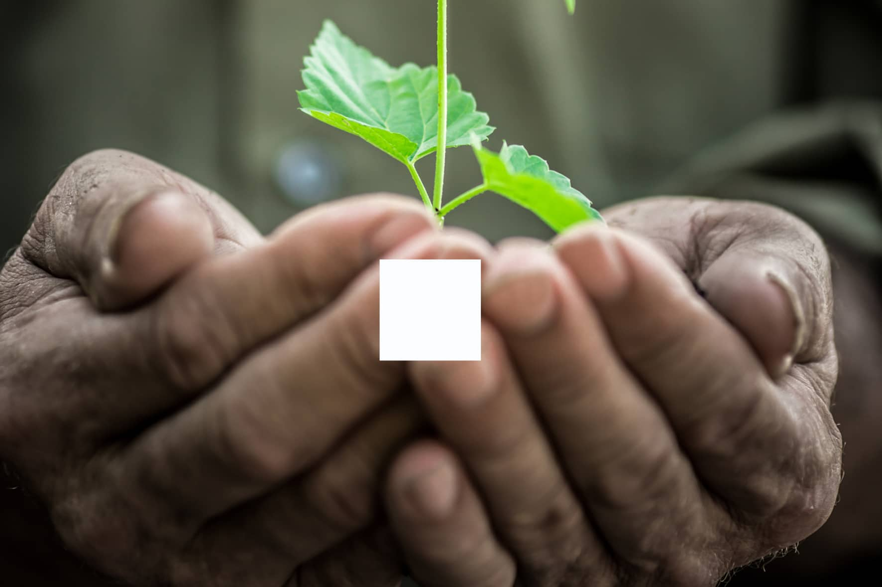 seme-pianta-gemma-fiore-frutto