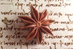 fiore-stellato-anice