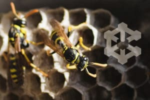 ape-simbologia