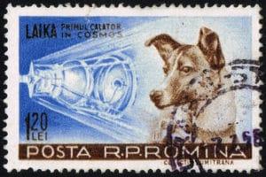 LAIKA. Il primo cane nello spazio ha una nuova missione.