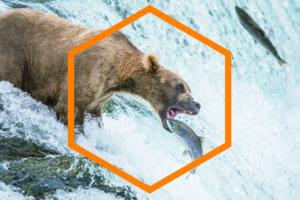 Neuroscienza e amore dell'orso per la geometria.