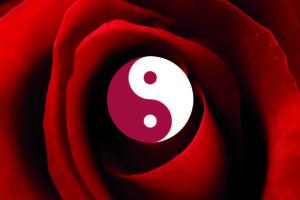 Il punto luce. Coltivare la rosa con amore e conoscenza